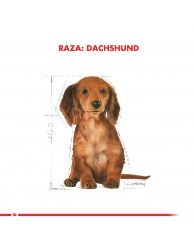 Royal Canin Dachshund Puppy 2,5 Kg
