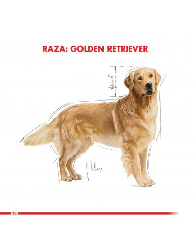 Royal Canin Golden Retriever Adulto...