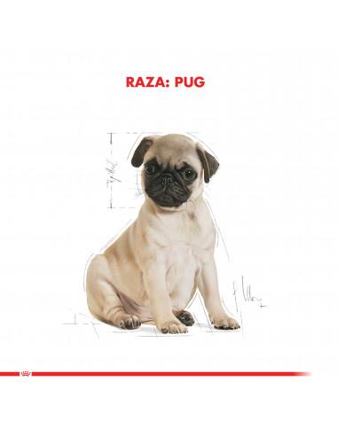 Royal Canin Pug Puppy 2,5 Kg